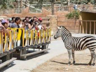 entradas escolares rio safari elche