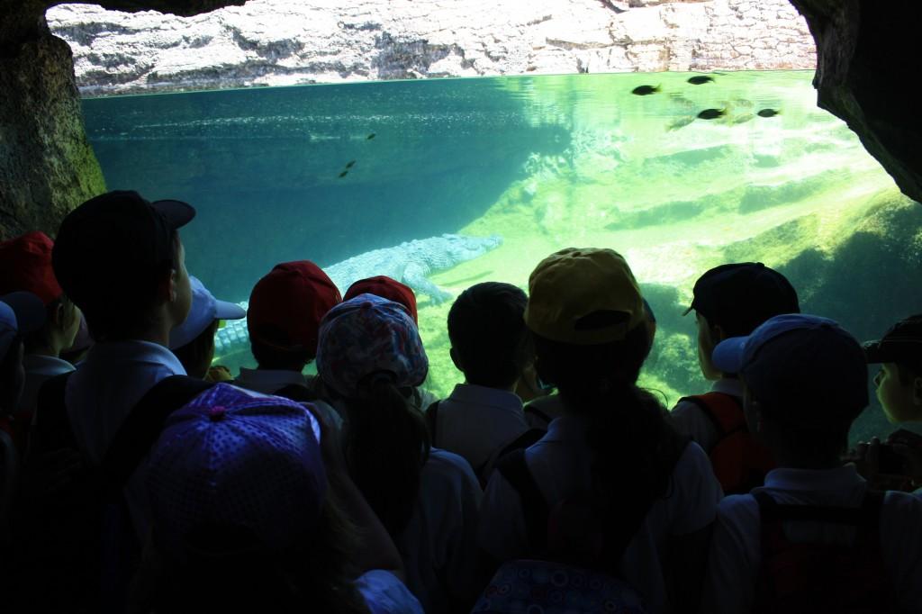 excursion bioparc valencia, venta entradas parques tematicos