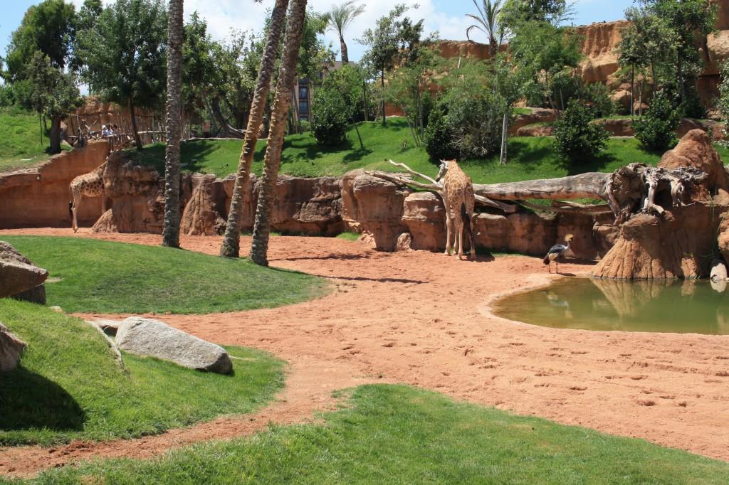 Excursion escolar Bioparc Valencia, venta entradas parques tematicos