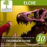 excursión escolar elche, visita guiada elche, visita colegios Elche, museo paleontologico elche